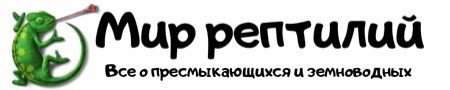 Логотип сайта Мир рептилий